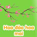 Hoa đào Hoa mai - Bộ 1