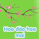 Hoa đào Hoa mai - Bé thách đố