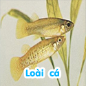 Loài cá - Bé thách đố