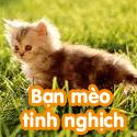 Bạn mèo tinh nghịch - Bộ 2