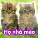 Họ nhà mèo - Bộ 1