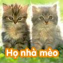 Họ nhà mèo - Bộ 2