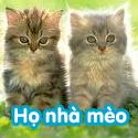 Họ nhà mèo - Bé thách đố