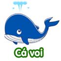 Cá voi - Bộ 3