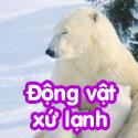 Động vật xứ lạnh- Bộ 1