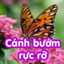 Cánh bướm rực rỡ- Bộ 1