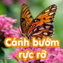 Cánh bướm rực rỡ- Bộ 2