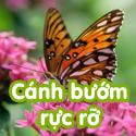 Cánh bướm rực rỡ- Bộ 3