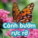 Cánh bướm rực rỡ- Bộ Bé thách đố