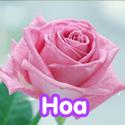 Hoa - Bộ 1