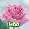 Hoa - Bộ 3