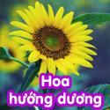Hoa hướng dương - Bộ 1