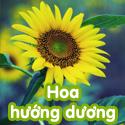 Hoa hướng dương - Bộ 3