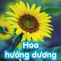 Hoa hướng dương - Bộ 4