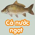 Cá nước ngọt - Bộ 2