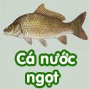 Cá nước ngọt - Bộ 3