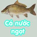 Cá nước ngọt - Bé thách đố
