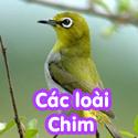 Các loài chim - Bộ 1