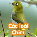 Các loài chim - Bộ 2