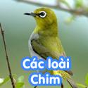 Các loài chim - Bé thách đố