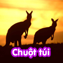 Chuột túi - Bộ 1