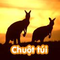 Chuột túi - Bộ 2