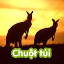 Chuột túi - Bộ 3