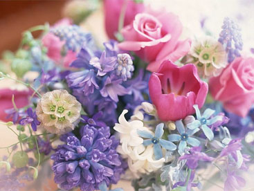 Vào rừng hoa