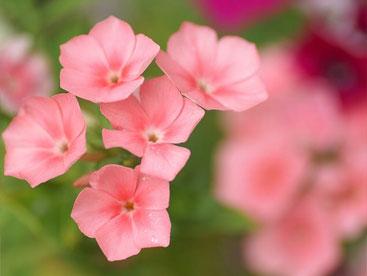 Hoa mùa hè