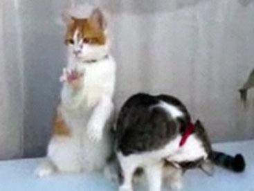 Chú mèo nghộ nghĩnh