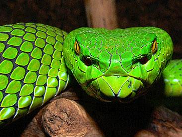 Khám phá loài rắn