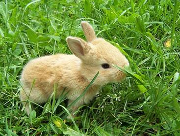 Khám phá loài thỏ