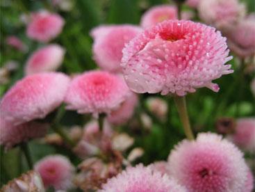 Cùng tới thăm vườn hoa Butchart đẹp nhất thế giới nhé