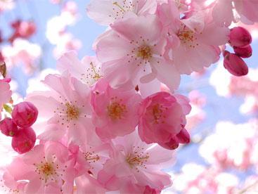 Liên khúc mùa xuân ơi
