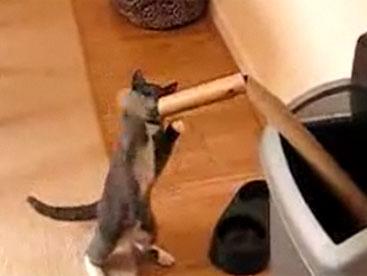 Chú mèo tò mò