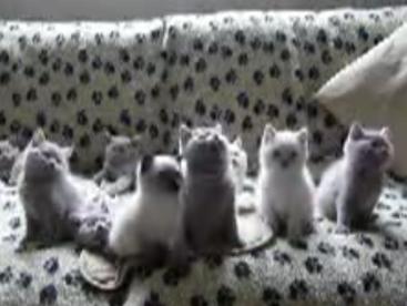 Đội múa của mèo con