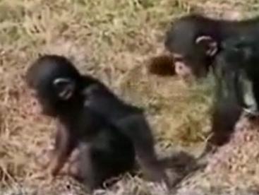 Khỉ con tinh nghịch