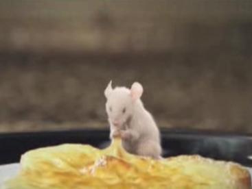 Kungfu chuột bạch