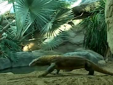 Loài rồng Komodo