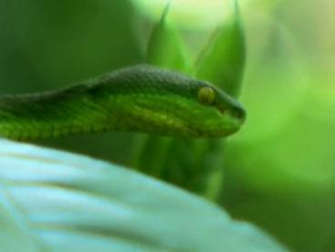 Khám phá loài rắn lục