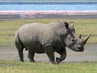 Khám phá loài Tê giác