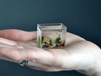 Bể cá nhỏ nhất thế giới