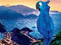 Vẹt Đuôi Dài Rio (P2)
