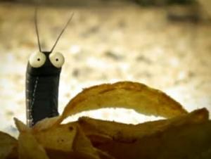 Thế giới côn trùng của tôi