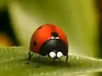 Thế giới côn trùng