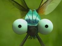 Nỗi sợ hãi của chuồn chuồn