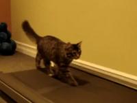 Mèo tập chạy