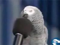 Chú chim vui tính
