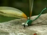 Chuồn chuồn đổ bộ