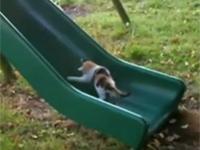 Mèo con chơi cầu trượt